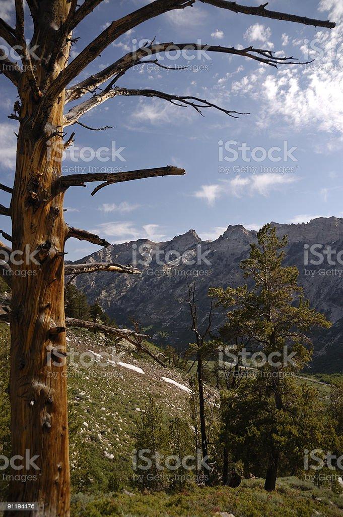 Ruby Mountains Island Lake Trail View stock photo
