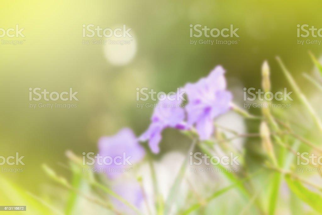 Ruellia tuberosa flower filed stock photo