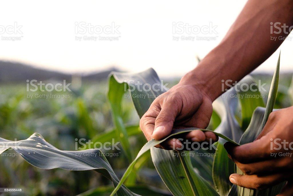 Rugged Farmer Hands stock photo