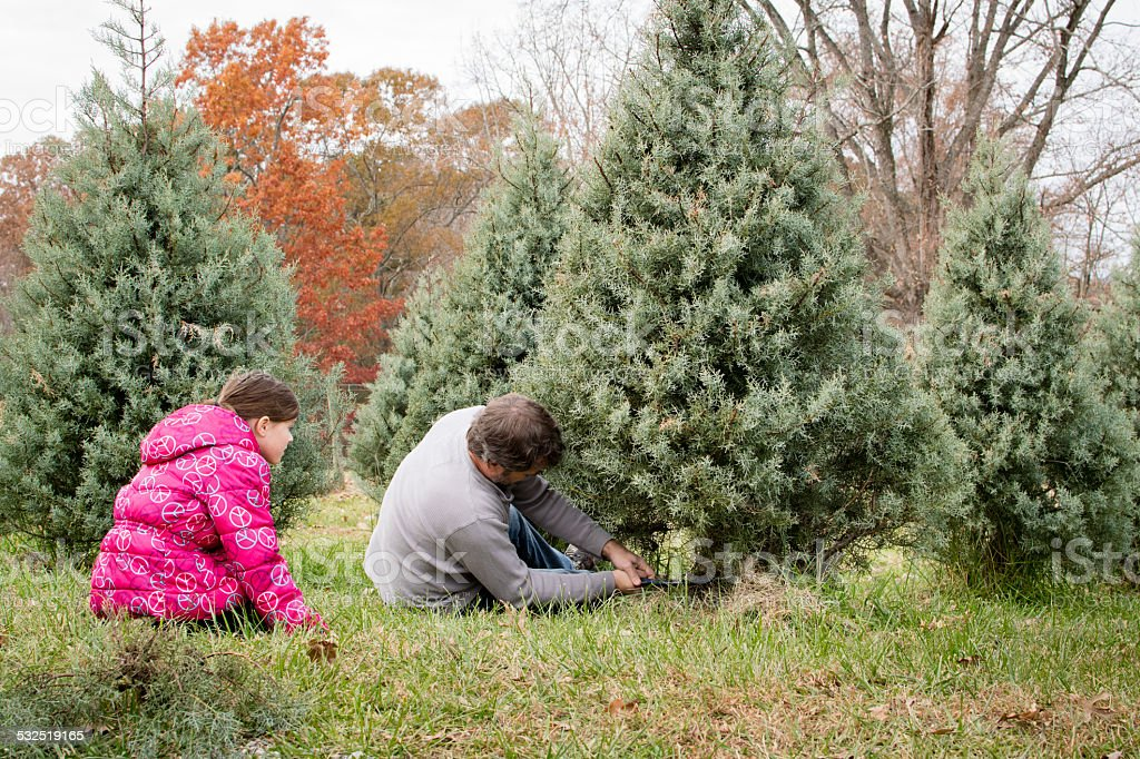 rugged man cutting down tree with young girl watching stock photo