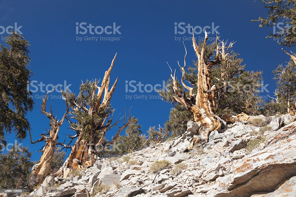 Rugged Mountain Terrain royalty-free stock photo
