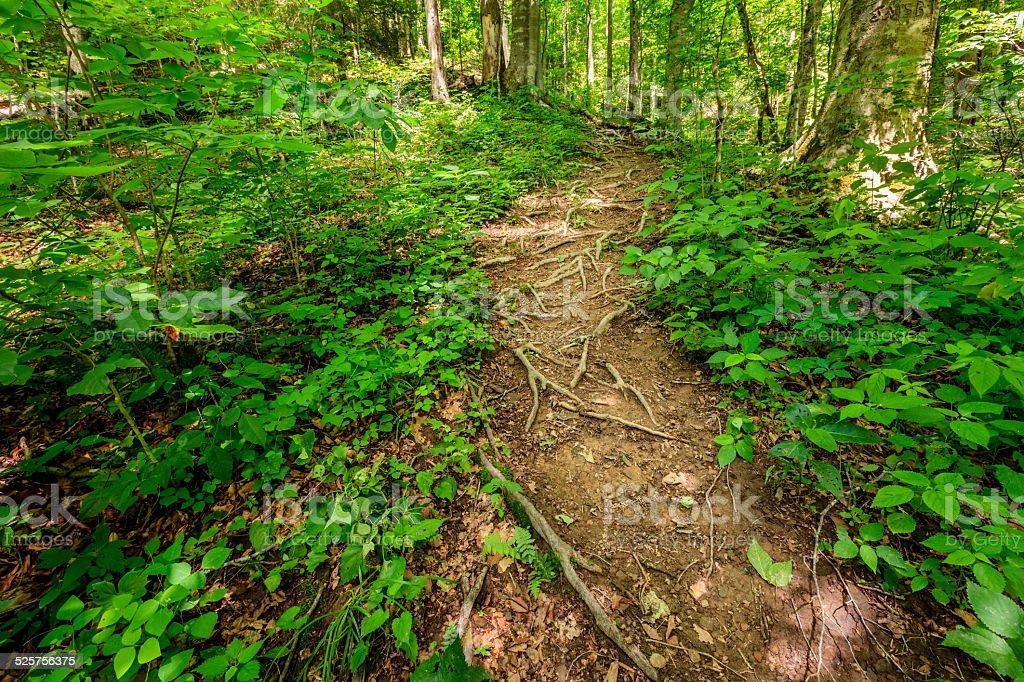Rugged trail stock photo