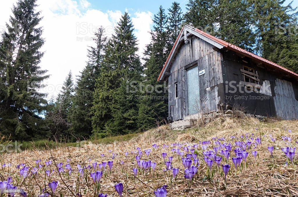 Ruined cottage in forest stock photo