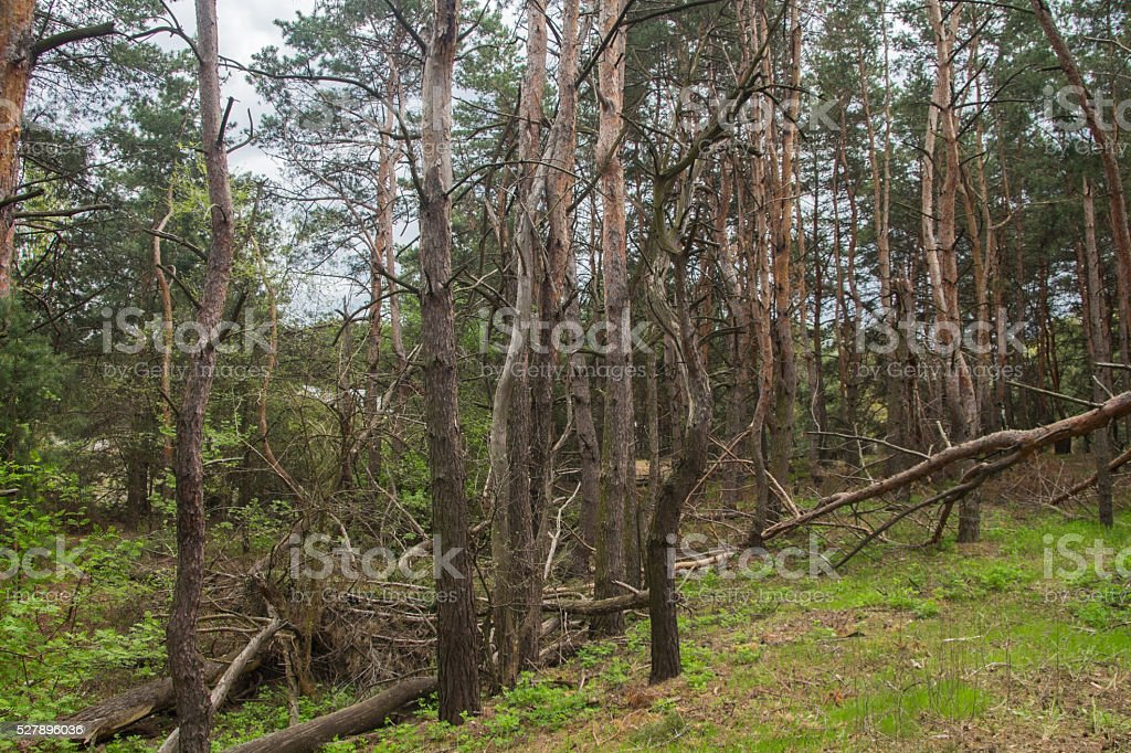 Ruined storm forest stock photo