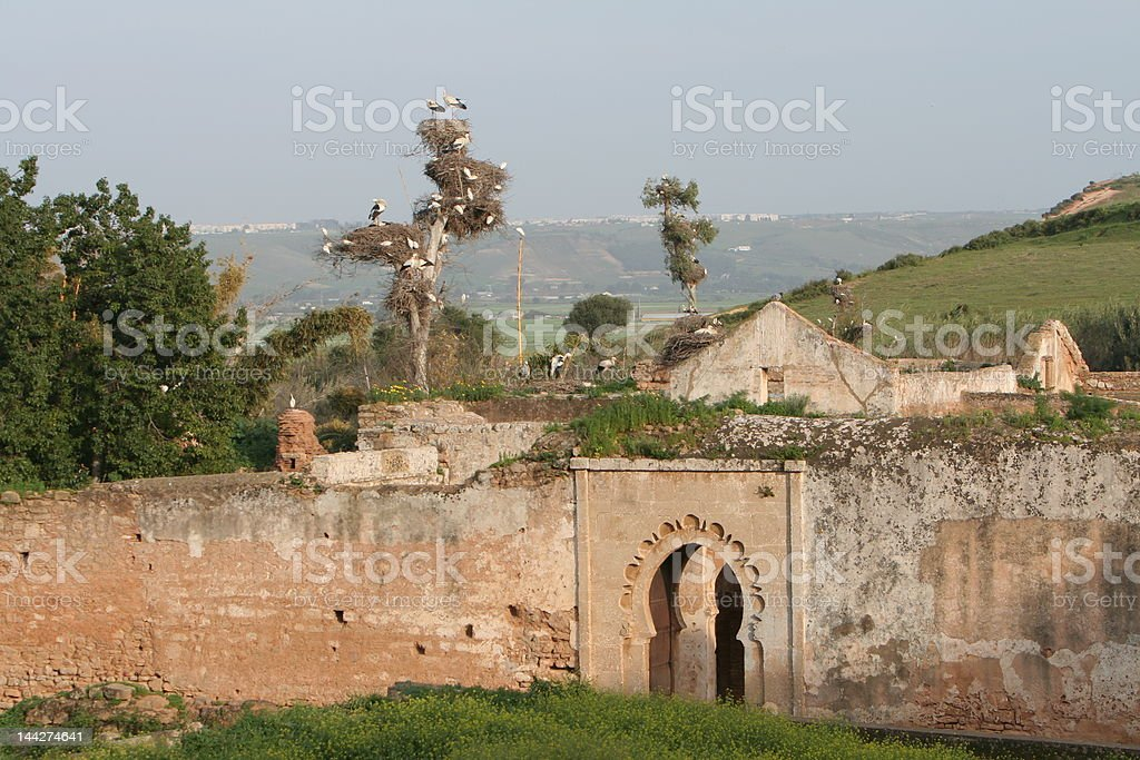 Ruins of Cellah in Rabat with storks royalty-free stock photo