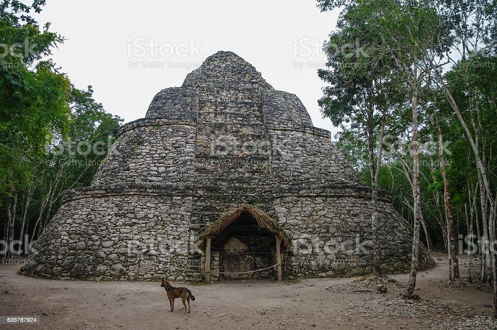 Ruins of mayan Pyramid in Coba. Mexico. stock photo