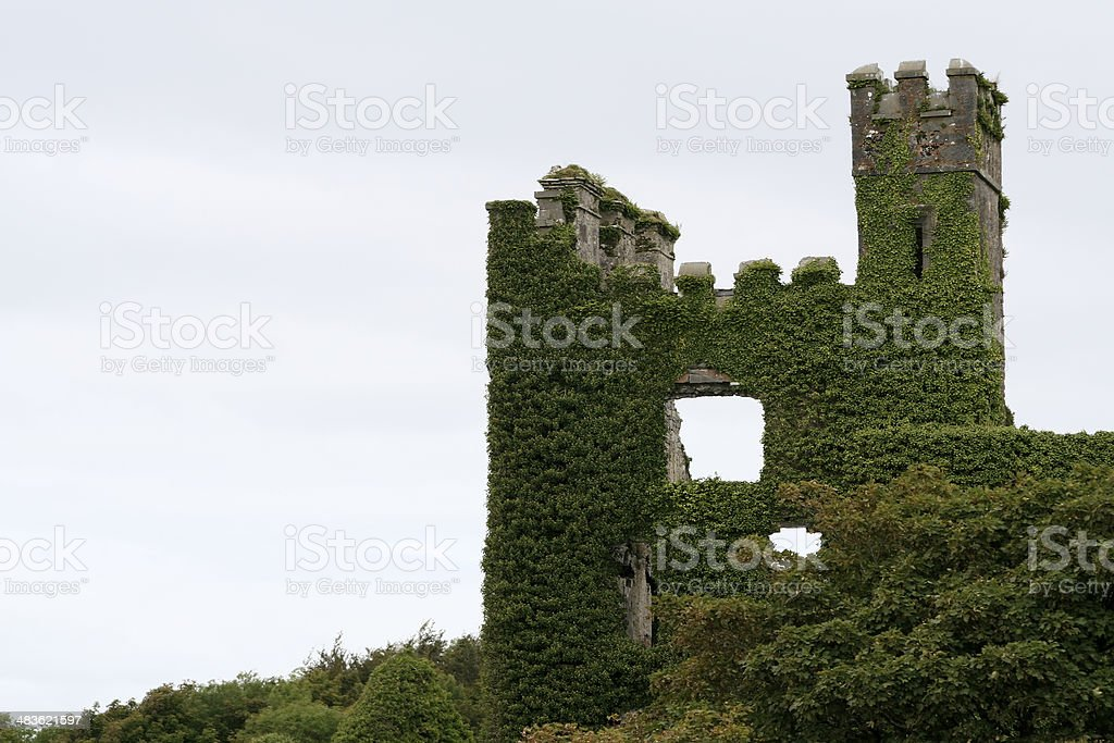 Ruins of Menlo Castle Covered by Creeper, Ireland stock photo