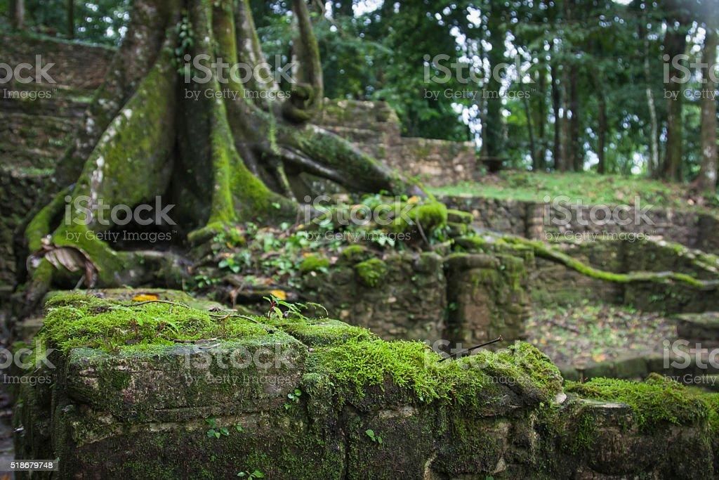 Ruins of Palenque, Maya city in Chiapas, Mexico stock photo