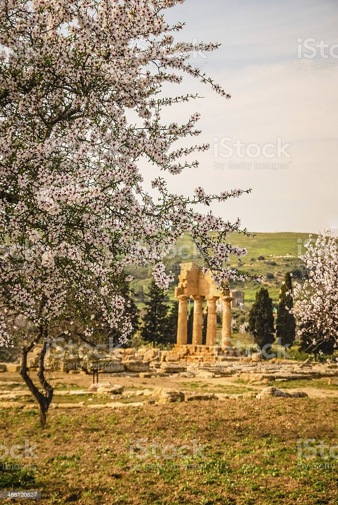 Ruins of Temple of Castor and Pollux in Spring royalty-free stock photo