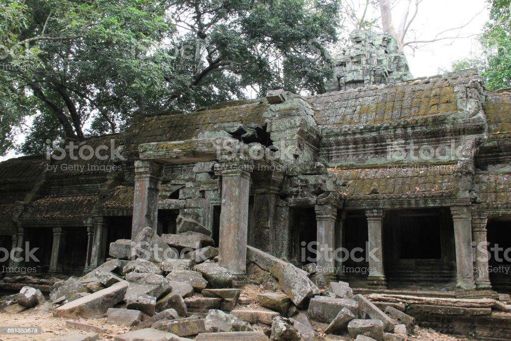 Ruins overgrown by huge tree stock photo