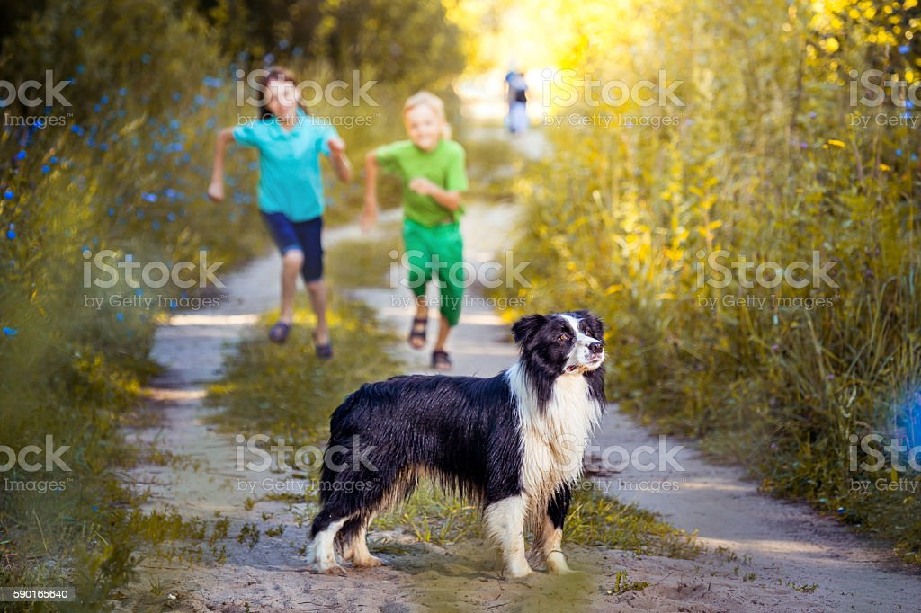 Run Dog Run stock photo