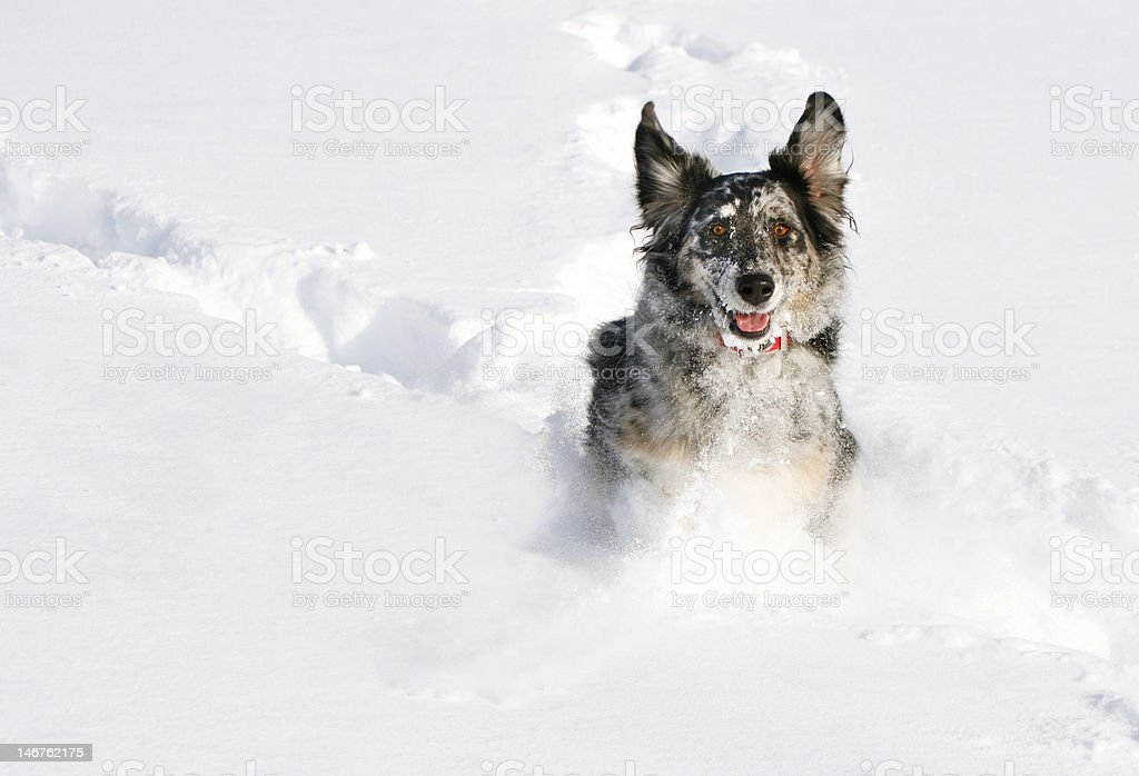 Run Doggie royalty-free stock photo