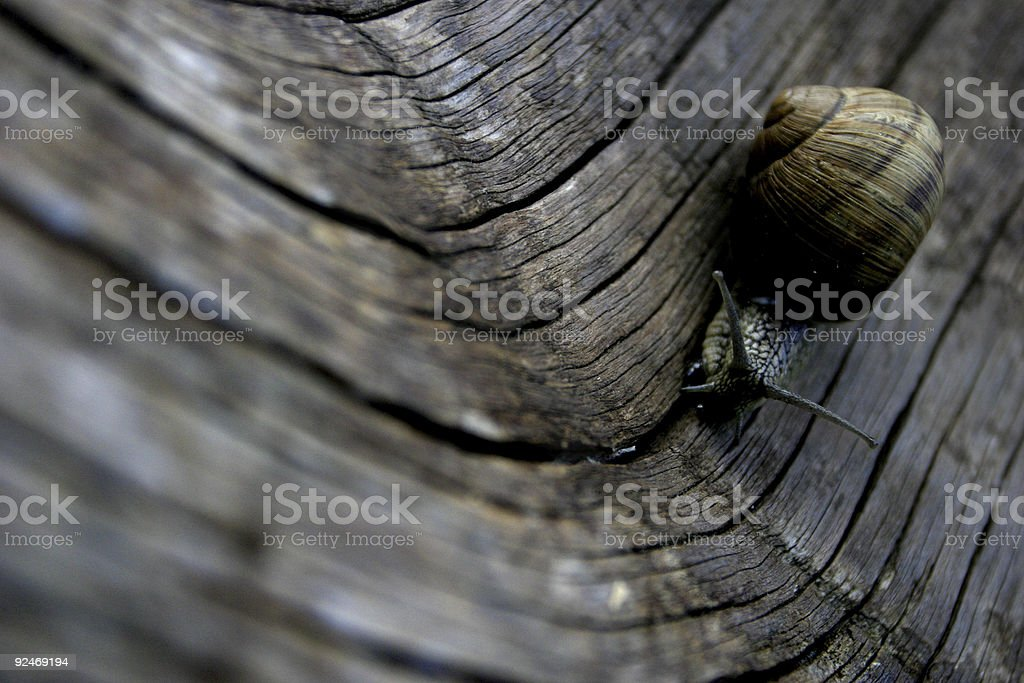 Run Forest! royalty-free stock photo