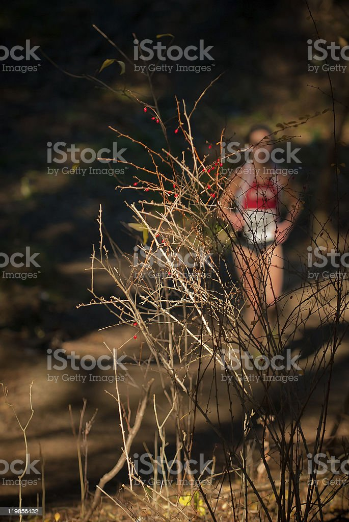 Runner and red berries royalty-free stock photo