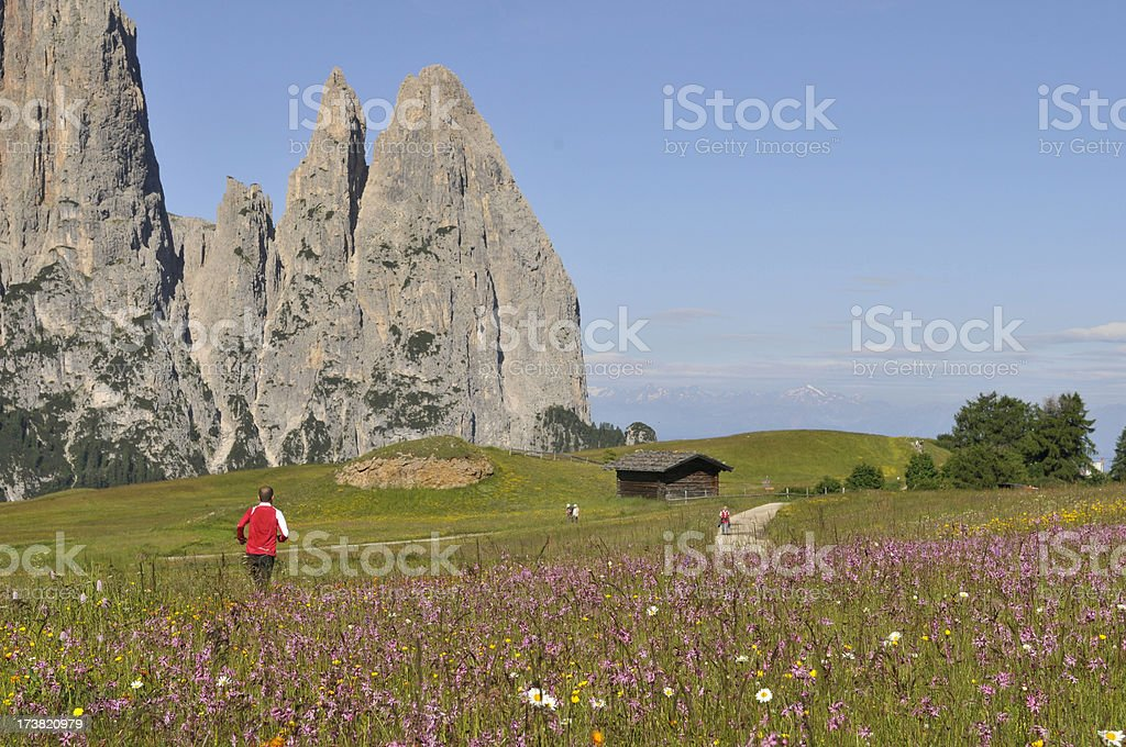 runner in the nature royalty-free stock photo