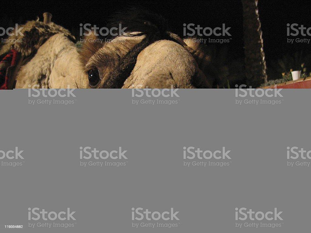 Runner Leatherback (coriaceus Carabus) stock photo