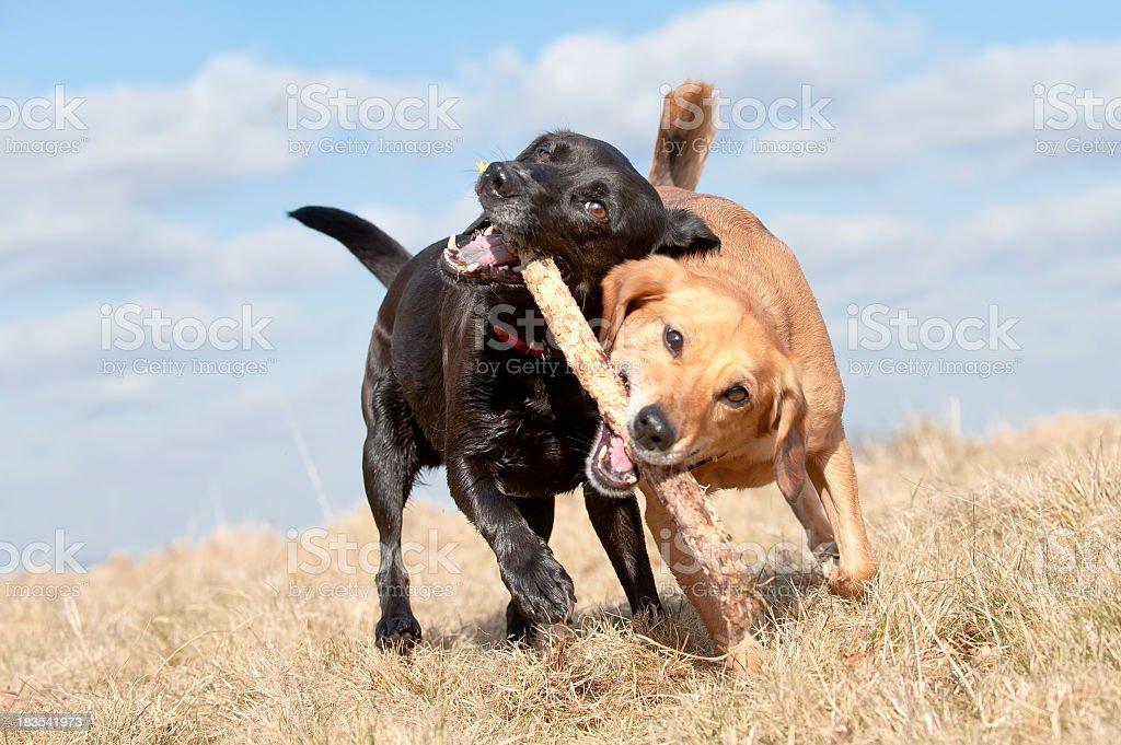running battle stock photo