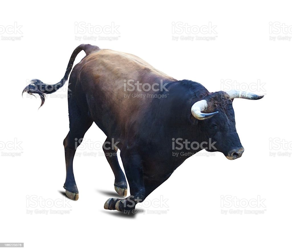 Running black bull stock photo
