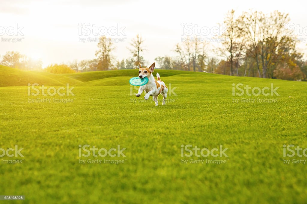 Running cute dog stock photo