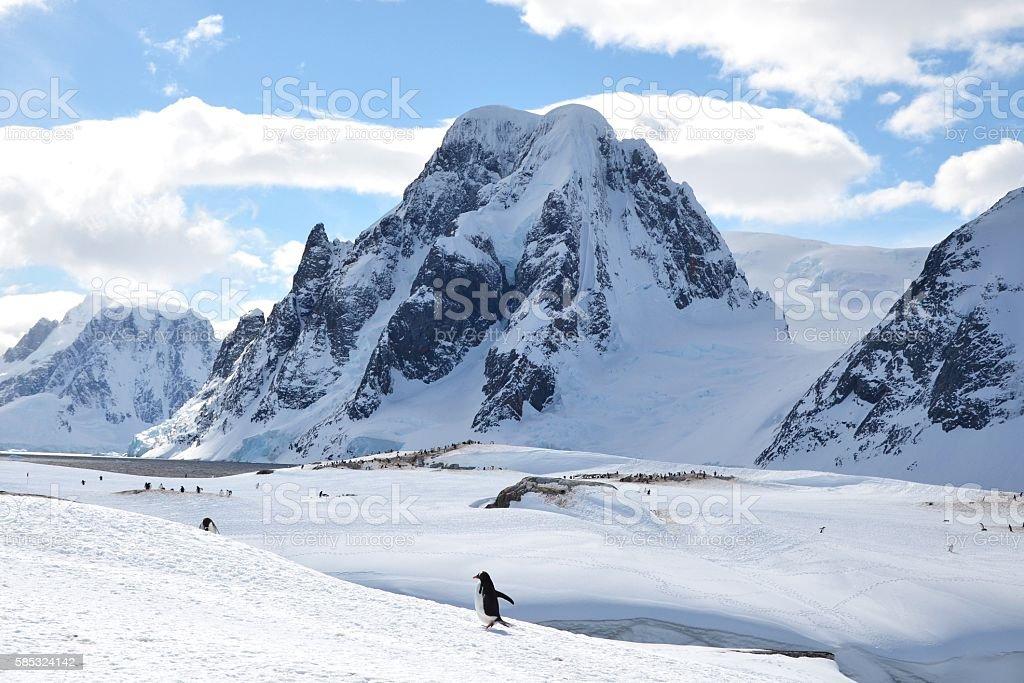 Running Gentoo and Mountain stock photo