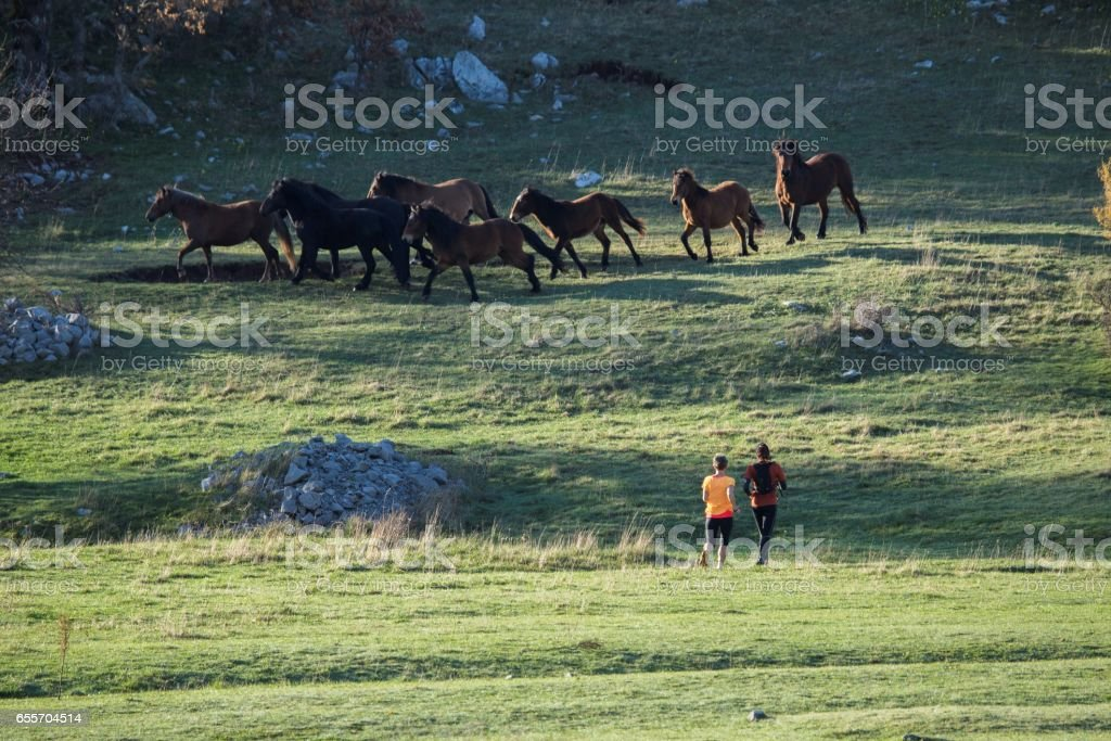 Running herd of horses on the lawn; on the summer morning. Two women running and crossing the lawn. stock photo