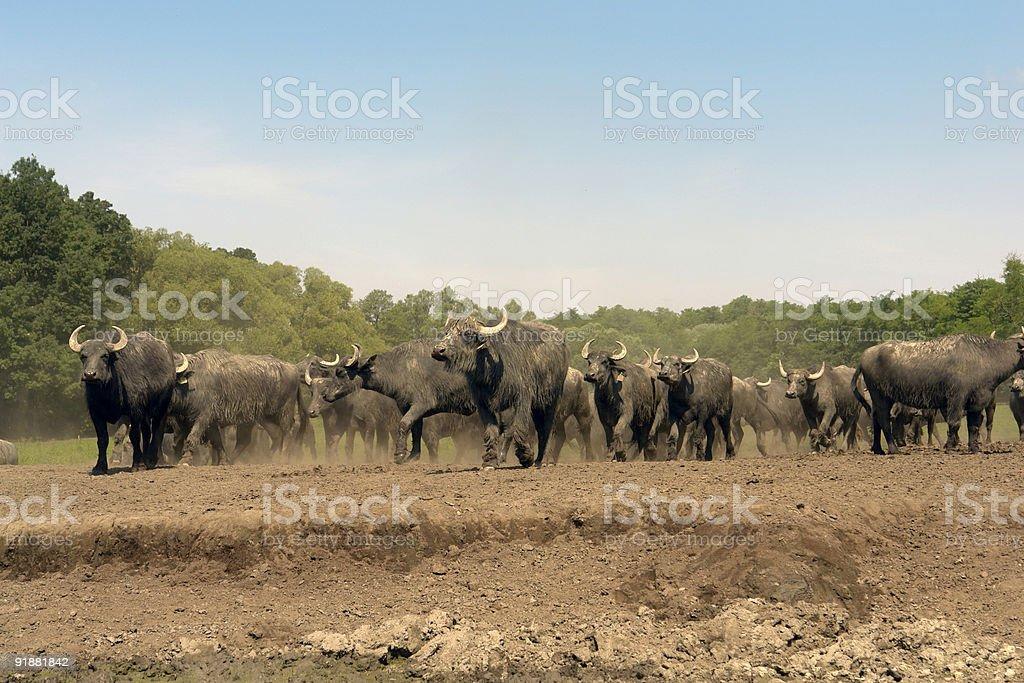 Running horde stock photo