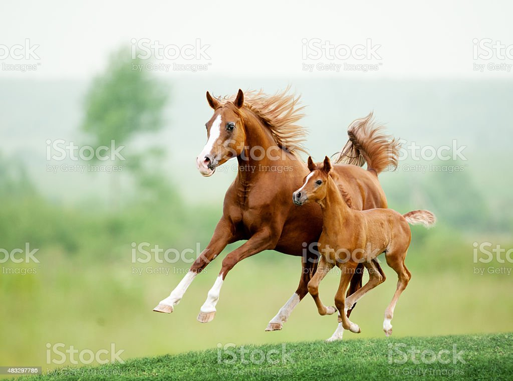 Running horse in meadow. Summer day stock photo