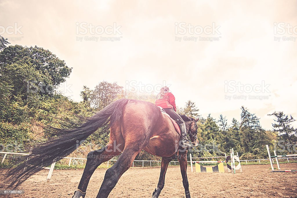 Running horse on dressage with rider stock photo