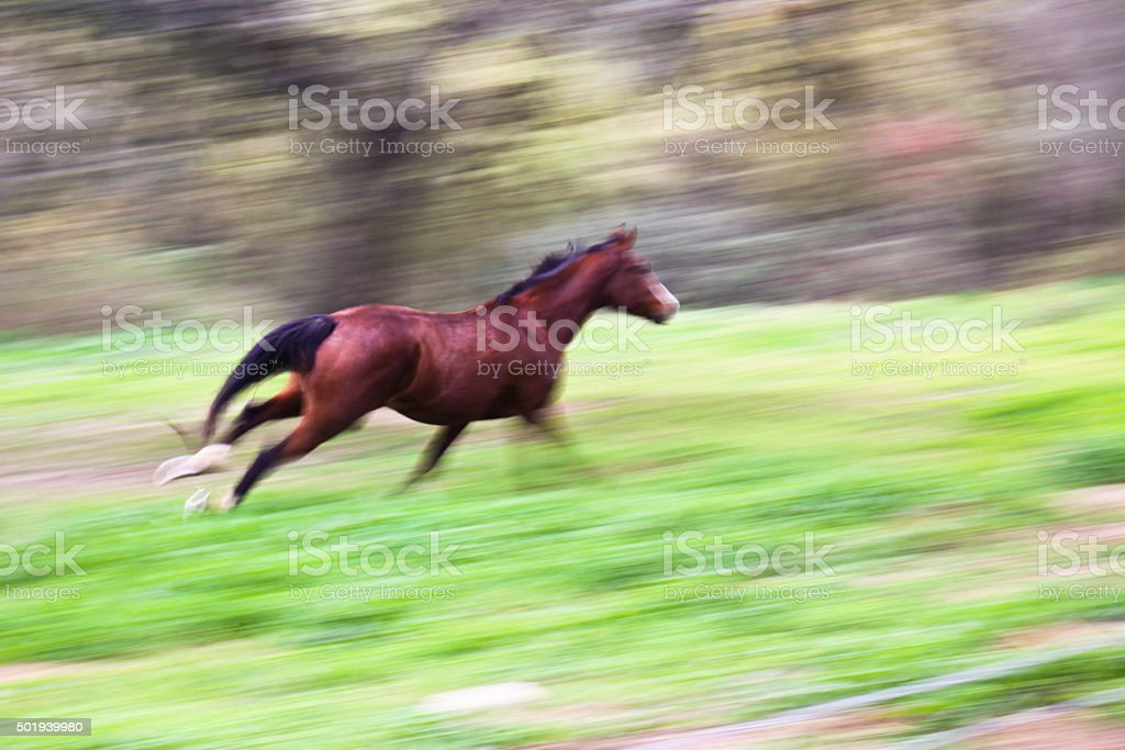 Running Horse stock photo