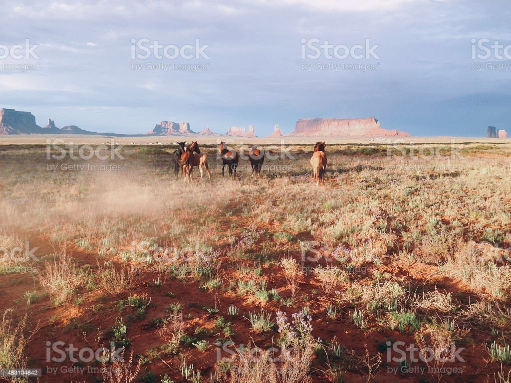 Running Horses royalty-free stock photo