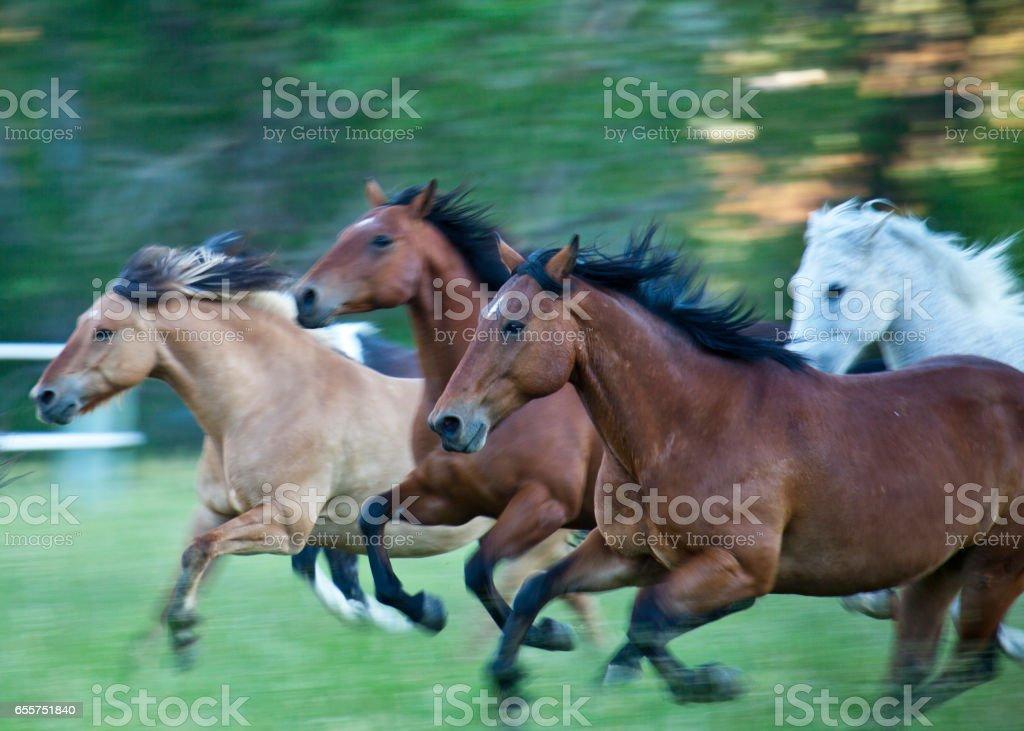 Running horses stock photo