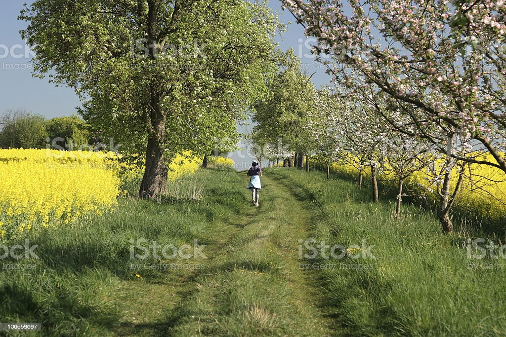 Running in a Spring Avenue stock photo