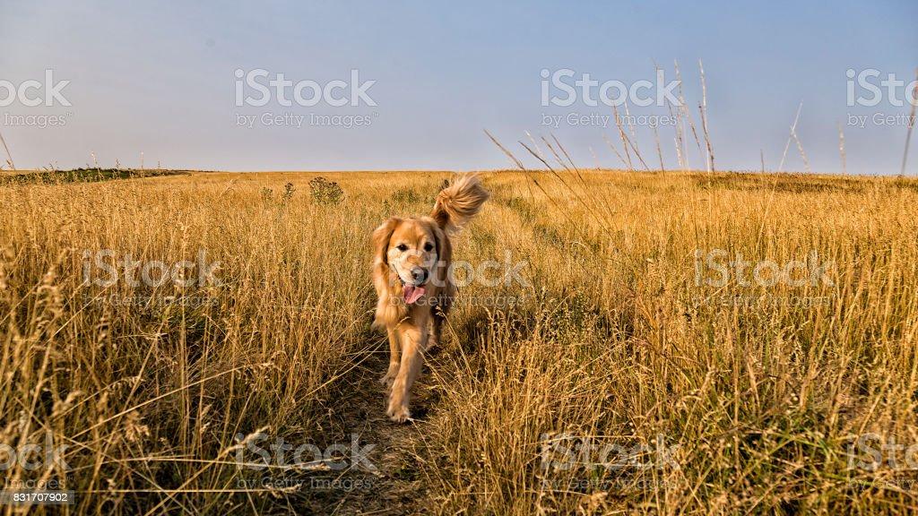 Running in grass stock photo