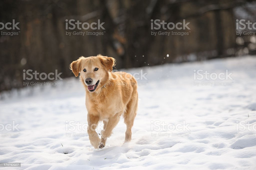 Running in snow royalty-free stock photo