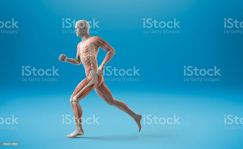 Running muscle anatomy man stock photo