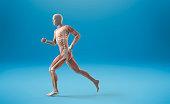 Running muscle anatomy man