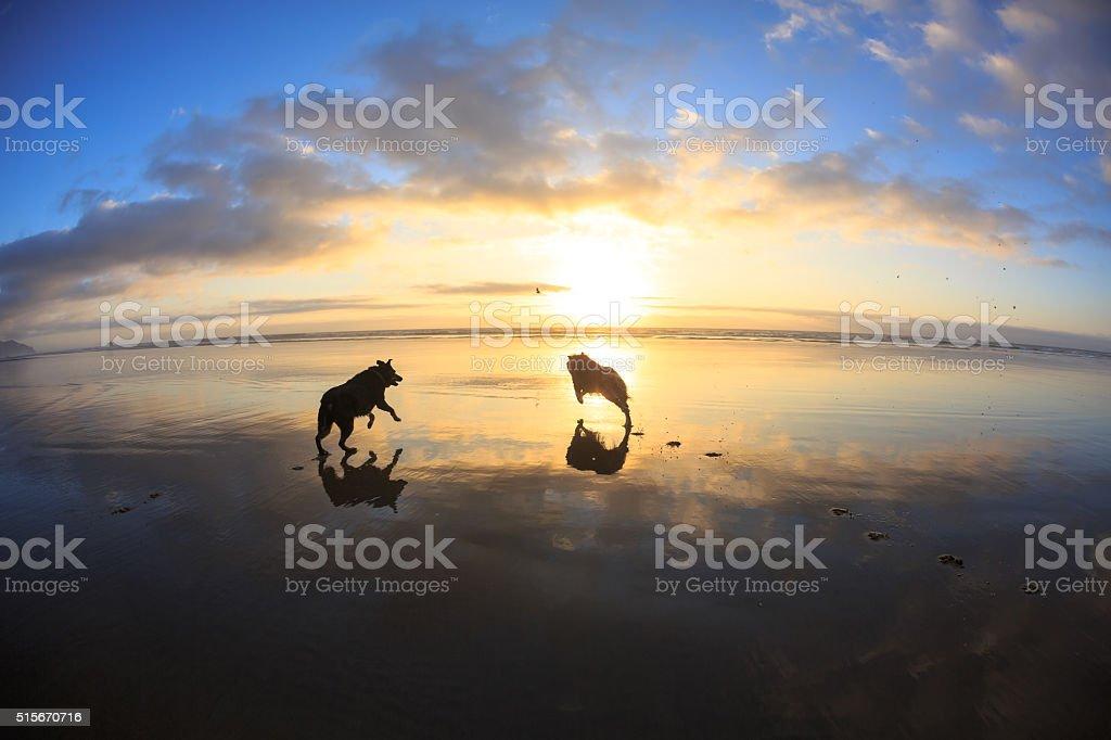 Running On Th Beach stock photo