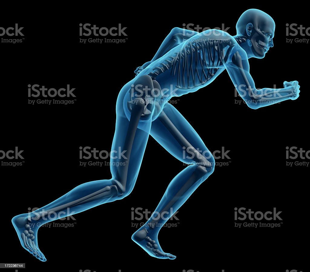 Running pose of the human skeletal body stock photo