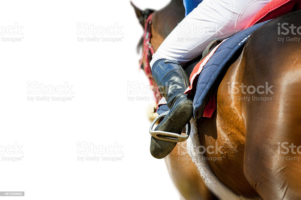 running racing thoroughbred horse coming first isolated on white stock photo