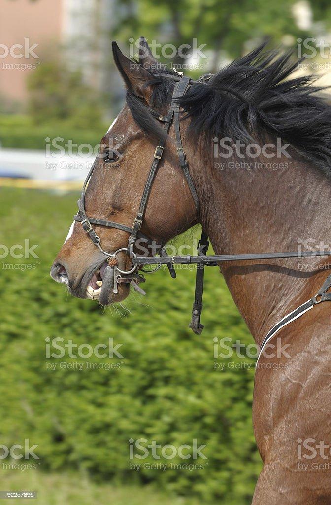 Running stallion royalty-free stock photo