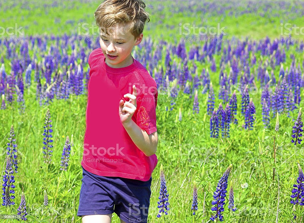 Running through the meadow royalty-free stock photo