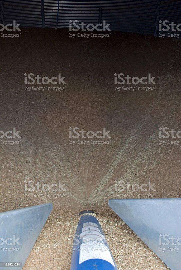 Running Wheat stock photo