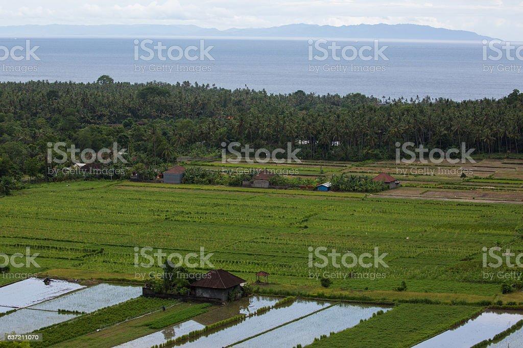 Rural agricultural lands Bali stock photo