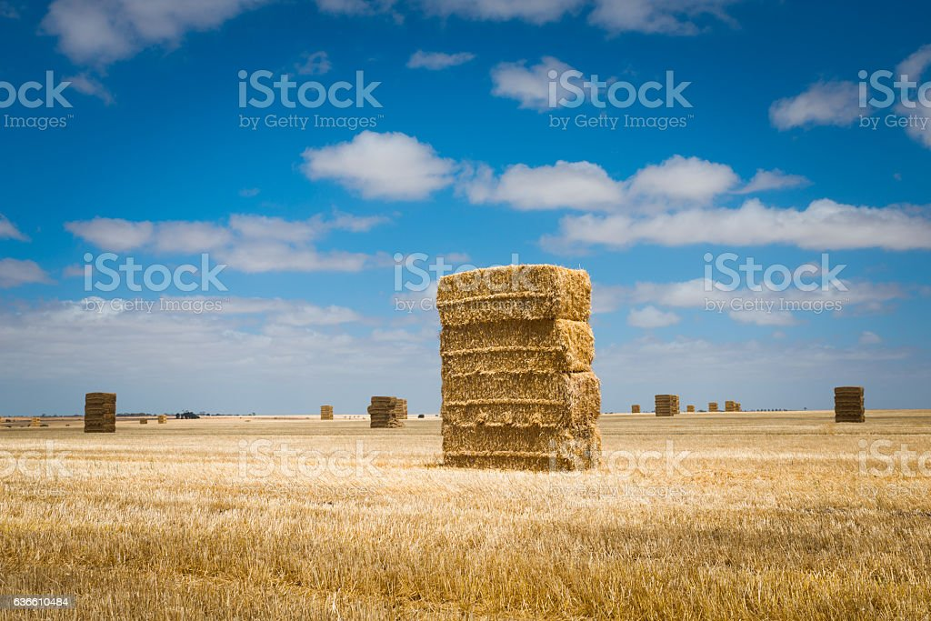 Rural Australian agricultural landscape Hay stacks in farm field stock photo