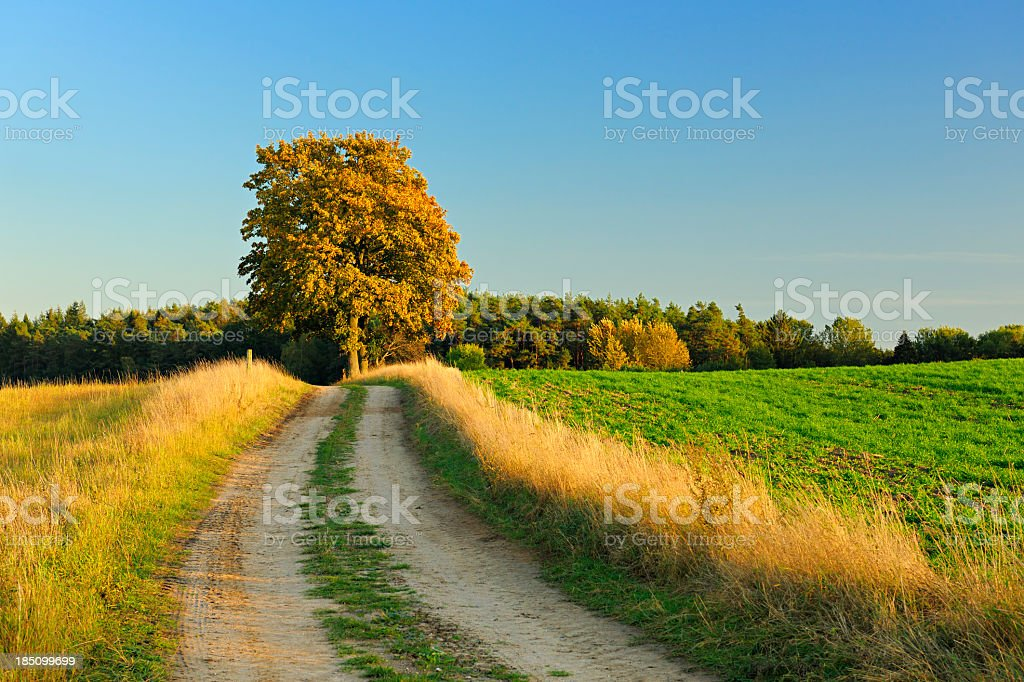 Rural Autumn Landscape with Farm Road Through Field and Forest royalty-free stock photo