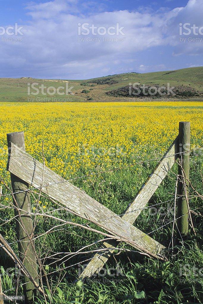 Rural California stock photo