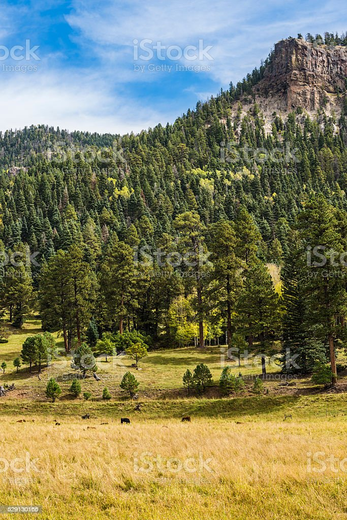 Rural Country view with cows in Colorado, USA stock photo