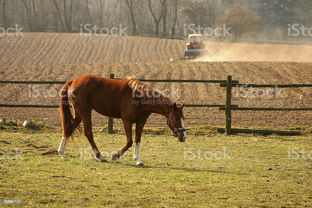 rural denmark royalty-free stock photo