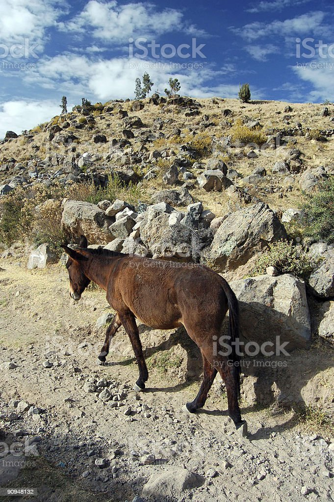 Rural Donkey royalty-free stock photo