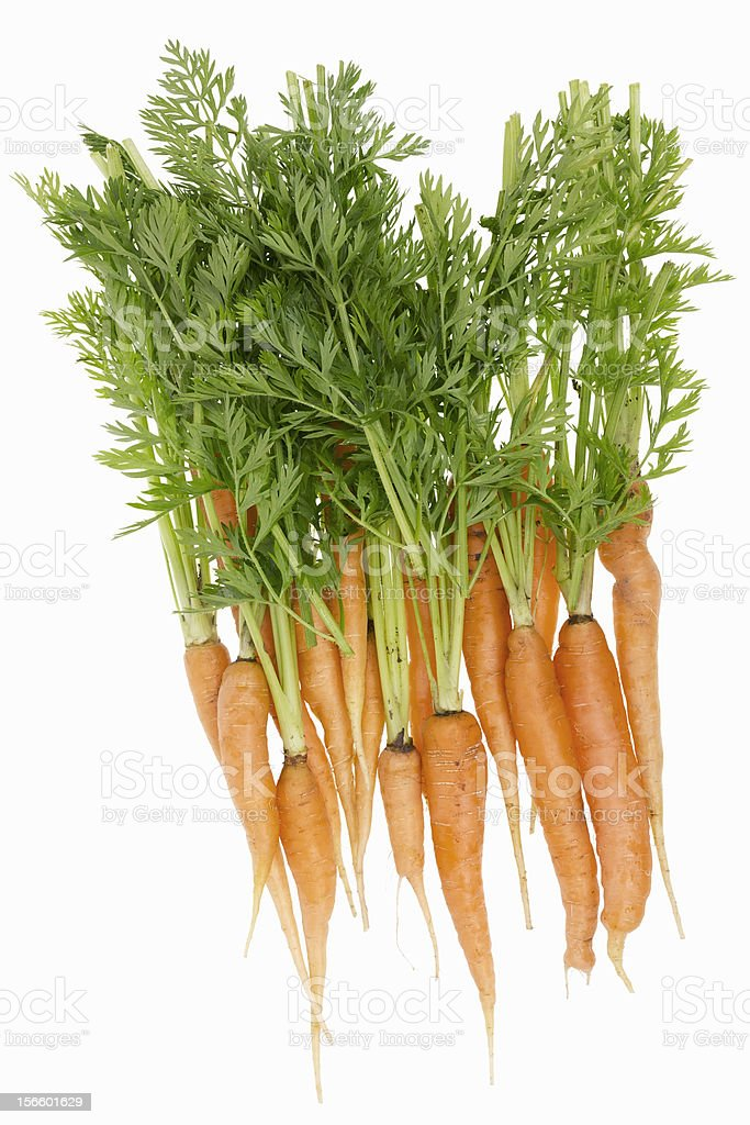 Rural ecological ugly carrot isolated royalty-free stock photo